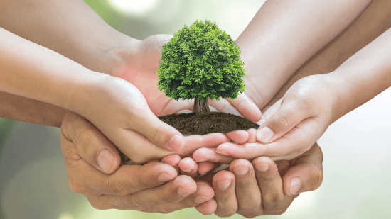 image of people holding hands to hold up a plant, metaphor for sustainability